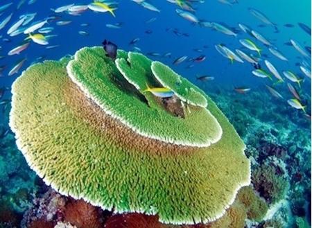 Imagen para la categoría BUCEO EN MALDIVAS
