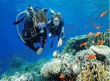 Bild von PADI Scuba Diver