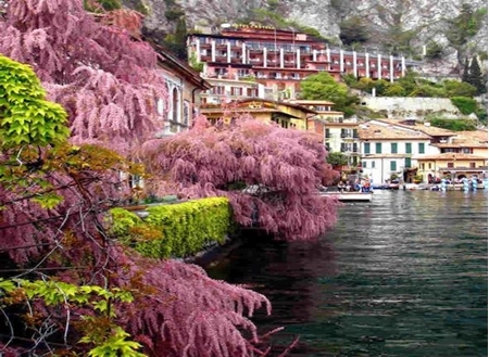 Picture for category LIMONE SUL GARDA